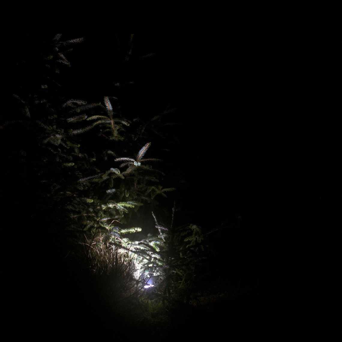 light_2-epson